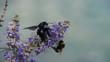 Obrazy na płótnie, fototapety, zdjęcia, fotoobrazy drukowane : bees on flower at beach