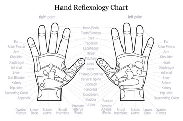 Hand reflexology chart description outline
