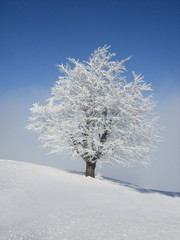 Winter landscape-snow and lonely tree