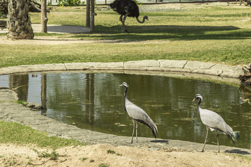 Tailand.Pattayya.Zoopark