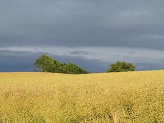 Sommerliche Felder