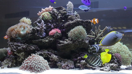 Coral colony on the reef with fishes