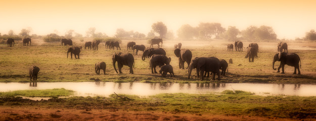 Herd of elephants in African delta