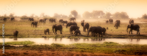 Tuinposter Olifant Herd of elephants in African delta