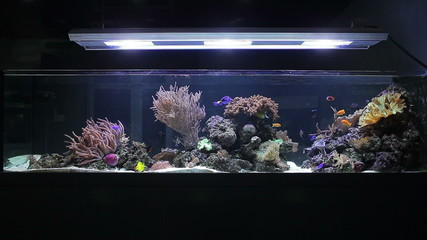 Aquarium with corals and tropical fishes