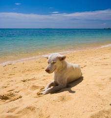 Wet Nose Salty Sea Dog