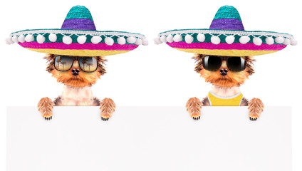 dog wearing a mexican hat with banner