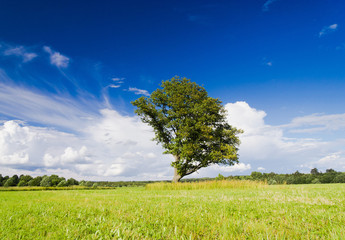 Plain Nature Calm Solitude
