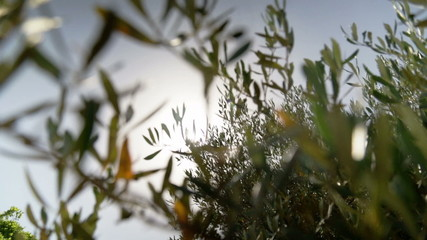 sunbeams in mediterranean Garden
