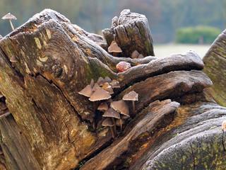 Frosted Fallen Tree