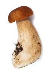 Fresh and beautiful mushroom