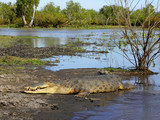 Giant Croc Mary River Northern Territory Australia poster