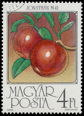 Stamp printed by Hungary shows Apples
