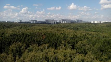 Город в лесу