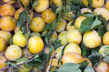 white plums
