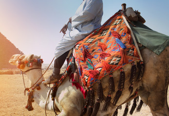 Camel driver at the Pyramids of Giza, Egypt