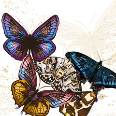 Fashion butterfly background