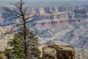 Grand Canyon, north rim