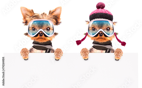 canvas print picture dog  dressed as skier with banner