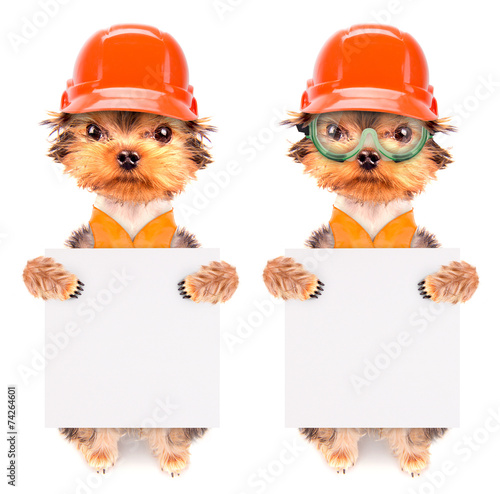 canvas print picture dog  dressed as builder with banner