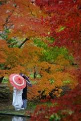 紅葉の結婚式