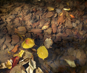 autumn leaves sunlit on a clear water creek