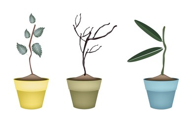Fresh Green and Dry Plants in Flower Pots