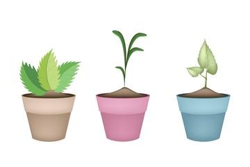 Beautiful Green Trees in Ceramic Flower Pots