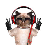 Cat headphones. poster