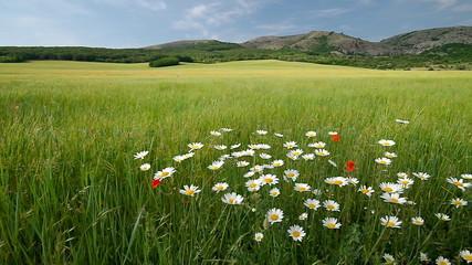 Green meadow in mountain