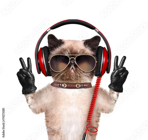 Foto op Plexiglas Kat Cat headphones.