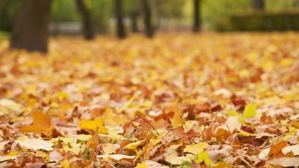 autumn leaves on ground, windy