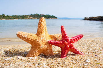 Two starfish on the beach