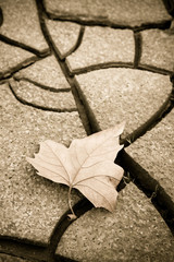 Isolated dry leaf on dry ground - autumn concet