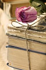 Dry rose on books