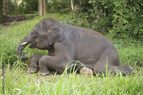 Tuinposter Olifant Elephant eating the grass