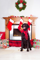dog by the fireplace decorated for christmas