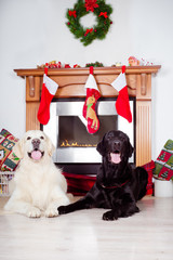 two happy dogs by a fireplace on christmas
