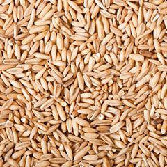 oat grains background