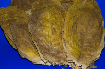 Oriental tobacco leaves