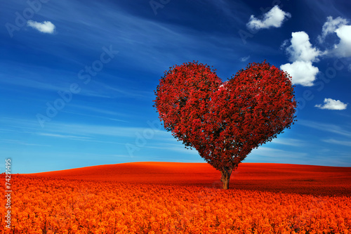 Heart shape tree with red leaves on red flower field. Love - 74291495