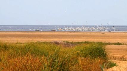 pack of seagulls fishing on lake