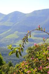 serra gaúcha próximo a Caxias do Sul