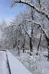 зимняя аллея