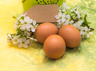 Chicken eggs and spring white blossoms
