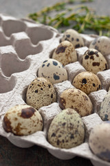 Quail eggs in the cardboard packing on the grey table