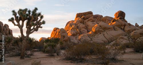 Joshua Tree Sunrise Cloud Landscape California National Park - 74298811