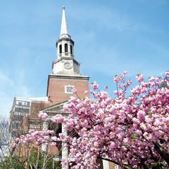 Washington Sakura in front of  Church 2010