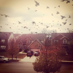 Birds flock, view from window.