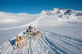 Dog sledding tour in Tasiilaq, Greenland